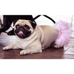 Flower Dog Skirt- Pink