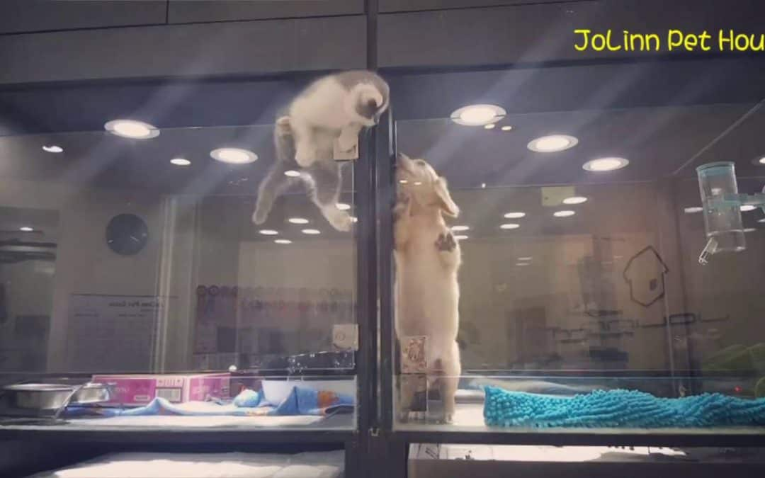 A Kitten Escapes Its Cage to Be with a Puppy