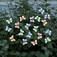 Smart Solar Butterfly Light String x 20