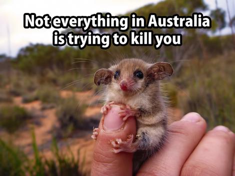 Australia has cute animals too