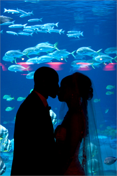 bride groom kiss in aquarium atlanta, georgia