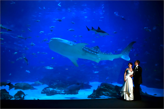 bride and groom in aquarium atlanta, georgia