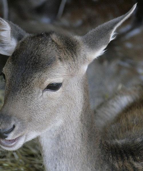 Deer Hunting in California – Tip 2
