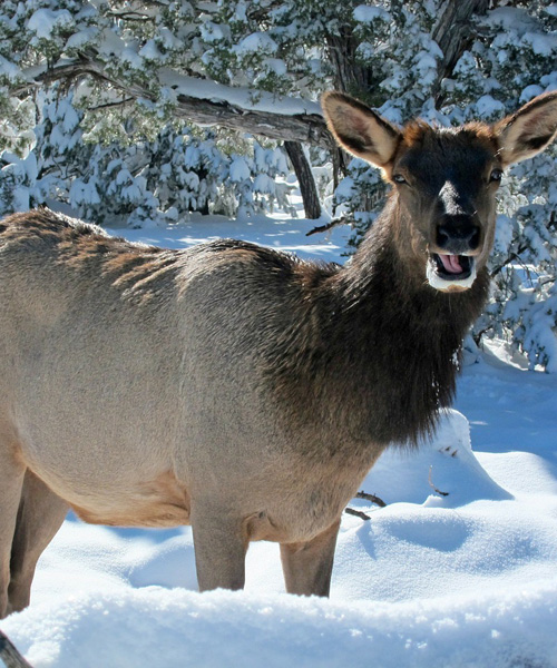 Get Yourself Prepared before You Head Out Elk Hunting