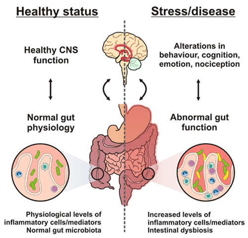 What does leaky gut look like?