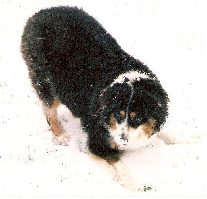 Lola in the snow