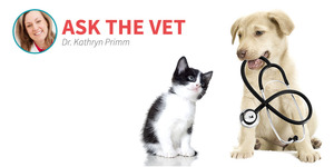 Connect with the Ask The Vet group