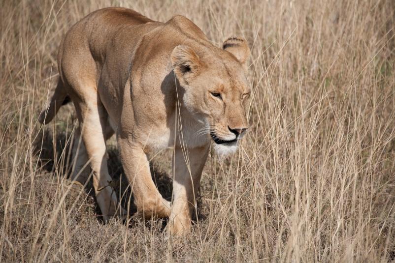 Wildlife_safari_-_how_to_choose_your_wildlife_safari_destination_in_africa2