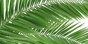 read about How can a few prayers – and palms – really hurt?