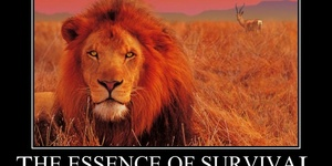 read about The Essence of Survival