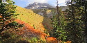 read about Fall color backpacking - Mt. Hood, Oregon