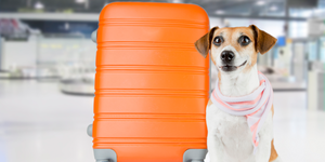 read about 5 Tips for Flying with Pets