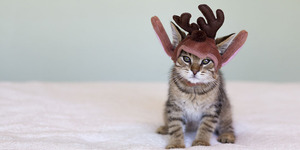 13 Dangers of Christmas for Pets