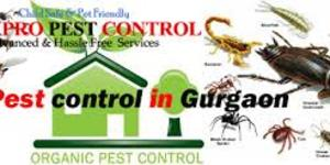 read about How Exactly to Prevent Pests on Summer