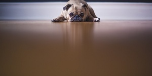 read about Is Your Dog Terrified of the Vet?