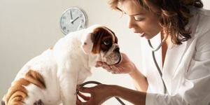 read about Why Is It Compulsory To Find A Good Vet For Your Darling Pet?