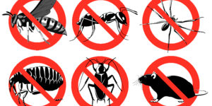 read about Why Hire Only Qualified Termite Inspection Roseville