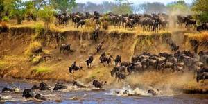 read about Top 6 Bucket-List Things To Do On Masai Mara Migration Safari Tour