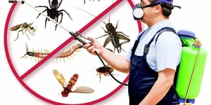 read about Top remedies for getting rid of bed bugs