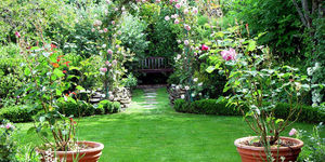 read about Only Garden Lovers Can Relate To These 3 Things about Gardening