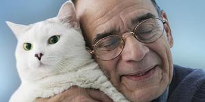 What Makes Cats Great Pets for Seniors