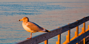 read about Discovering wildlife while holidaying in Ocean City