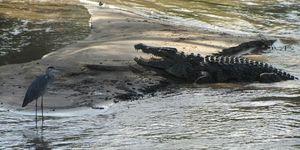 read about Tanzania wildlife safari