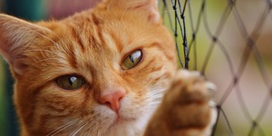read about A Brief Guide to Pet Care Through Cat Boarding