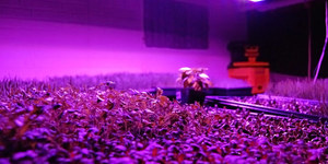 read about Perks of Reading LED Grow Light Reviews