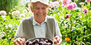 read about 10 Easy Gardening Tips for Older Gardeners