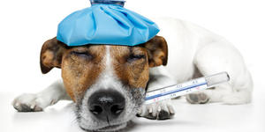 read about Signs your pet needs a vet