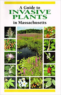 Guide to Invasive Plants in Massachusetts