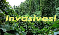 Invasives_footer