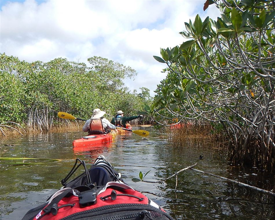 Henry Gainer led BCCC members on an adventure through the Everglades and around the Florida Keys.