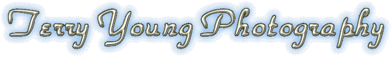Terry Young Logo