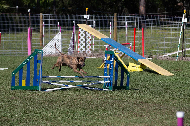 Dog Obedience Training Cocoa Fl