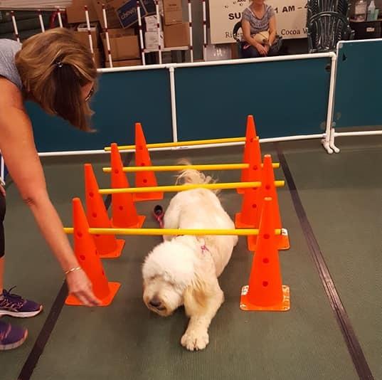 Dog Training Brevard County Fl