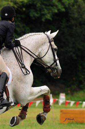 Some fantastic images of our outdoor August 2009 Hunter Jumper Show compliments of Julie Ward.