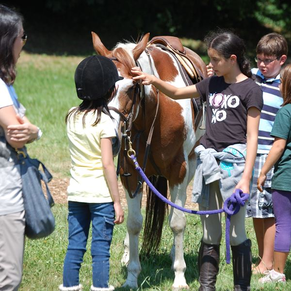 Some fun photos of our summer Equestrian Camp.