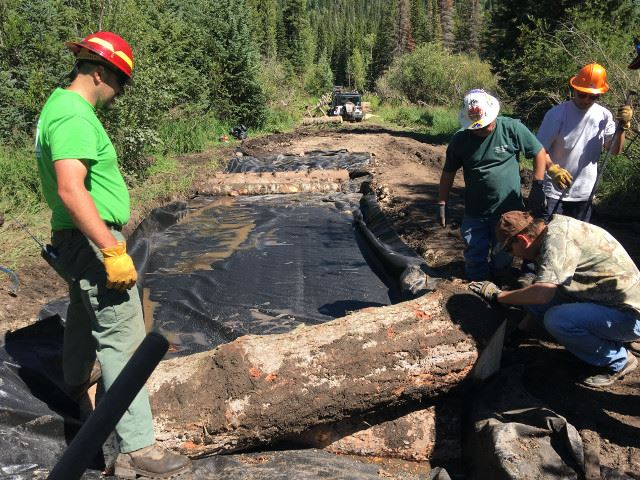 MDLSTVRN 2017 bog, placing logs