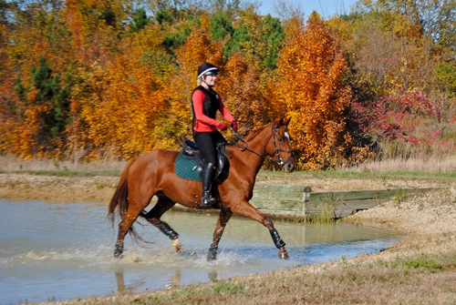 Horse and rider splash through the water complex at Focused Riding