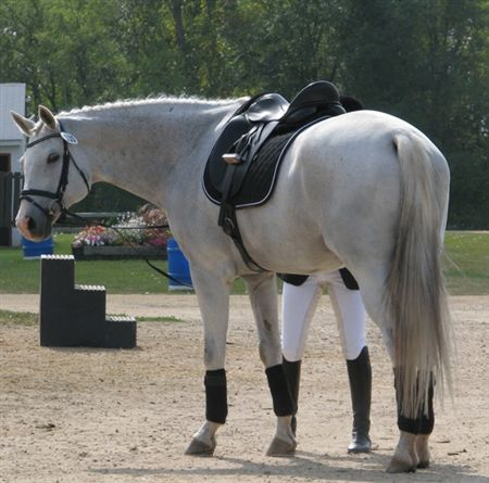 These are photos that were shot randomly at the 2009 CSDEA Dressage Festival.  No favoritism was shown, they were just taken as opportunities were presented.       Enjoy!