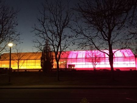 Greenhouse with HPS and LED lights