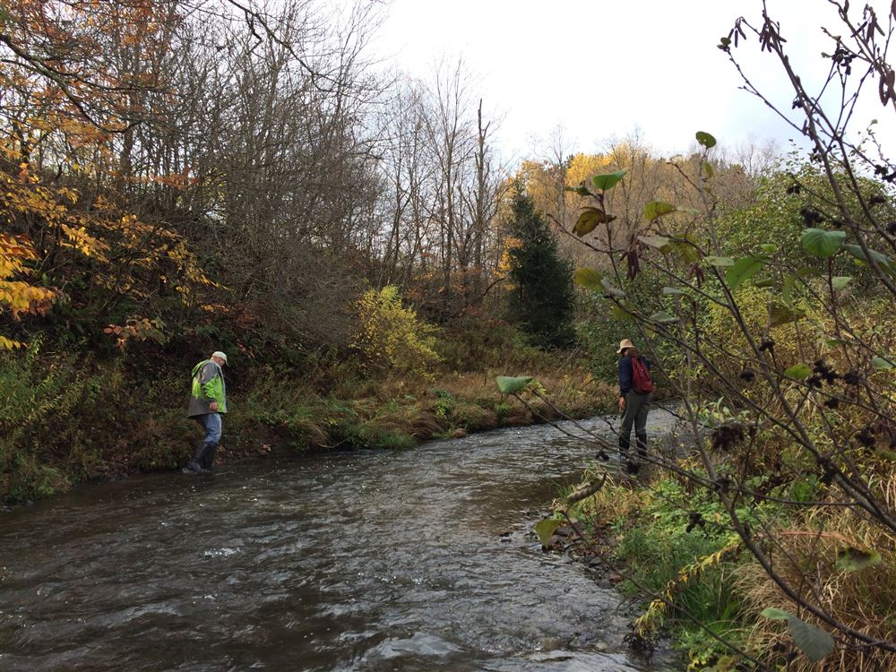 Butternut Creek from Rabbit Hollow Rd to Otsego County 16 on Oct. 21, 2016.  Selected images taken by Bob Thomas, surveying the creek with Ed Lentz and Alex Wing.