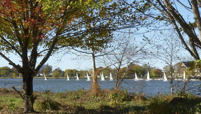 laser sailing in fall