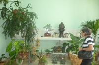 La Casa del Bonsai, una opción para decoración