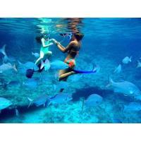 ¿QUIERES BUCEAR EN CUBA? PONGO EQUIPO Y LA EXPERIENCIA