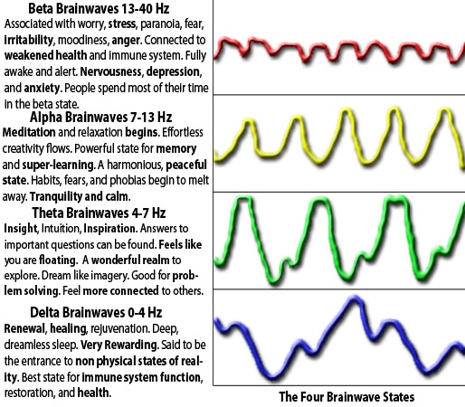 Brain Waves Animals Brain Waves And Health