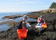 Students conducting research on intertidal pools in Acadia National Park, Maine.