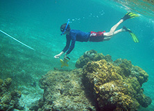Students snorkel on an Earthwatch Expedition